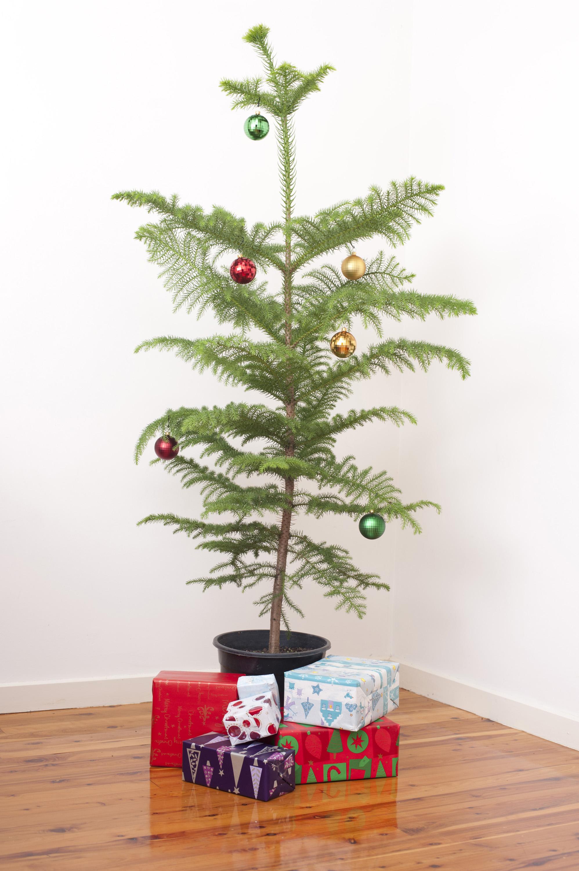 photo of simple christmas